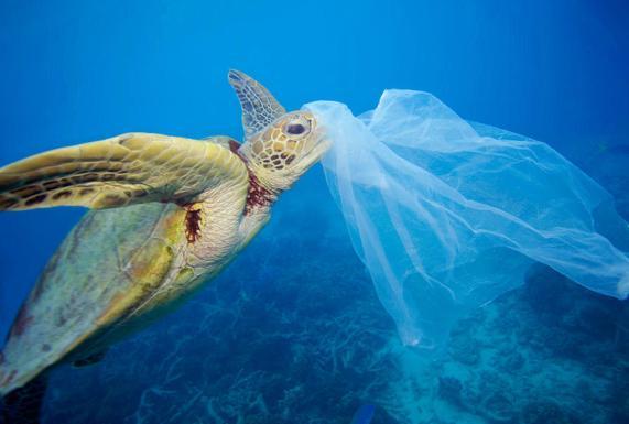 Marcas de moda que reciclan plástico y limpian los océanos