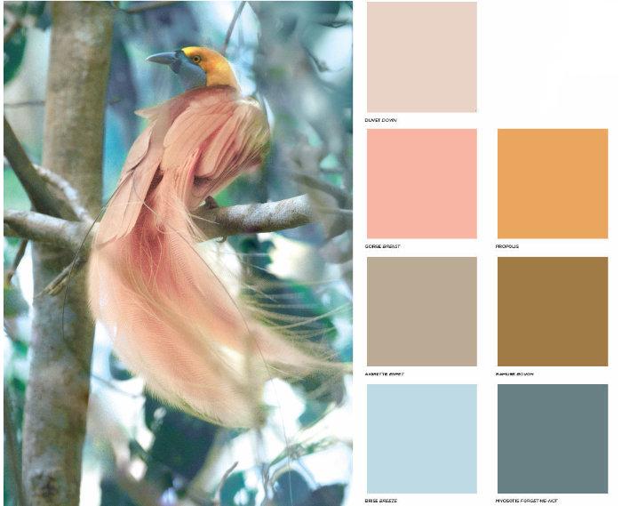 Colores gama Grace