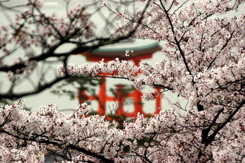 ¿Qué es la metodología Keiretsu y cómo te puede ayudar?
