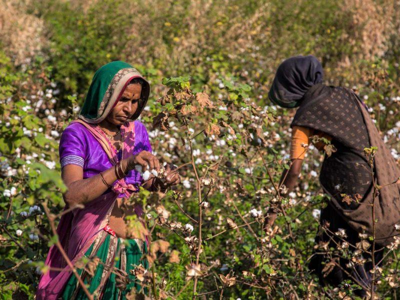 oca, organic cotton accelerator